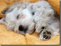 Gino schläft