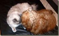C Giovanni und ein Kätzchen