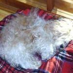 Zesario - sooo müde 2