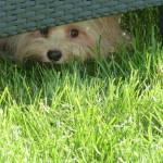 Claudia - Johna spickst unter dem Zaun durch