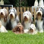 claudias Bärenfamilie 1,7,15