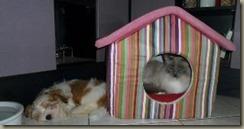 Jeremias Häuschen ist besetzt - schläft er eben draußen