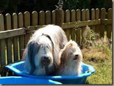 Eliah und Jonah in einem pool - cool