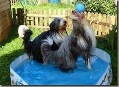 claudia Wasserball