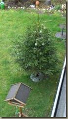Weihnachtsbaum im Garten