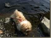 Zesario im Wasser